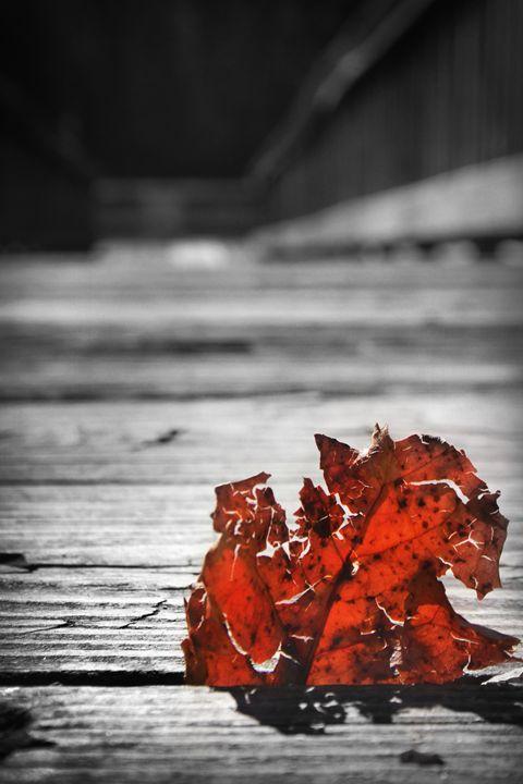 Cracked Red Leaf Standing Up - Kelly Hazel
