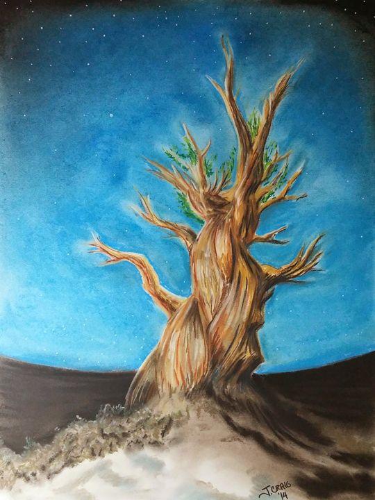 Methuselah Tree - Jim's Art Spot