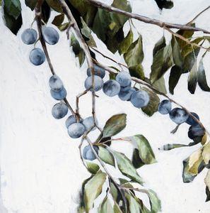 Tern Berries.