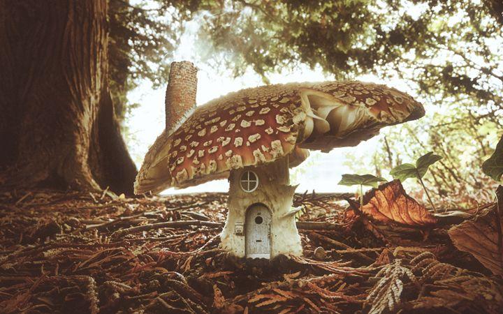 Mushroom House - Zachary P. Humway