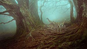 Forest Playground - Zachary P. Humway