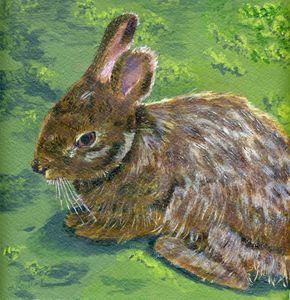 Cottontail - Lynne Reichhart Fine Art