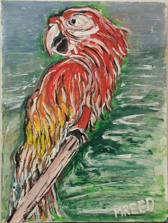Polly parrot - Reeds gallery