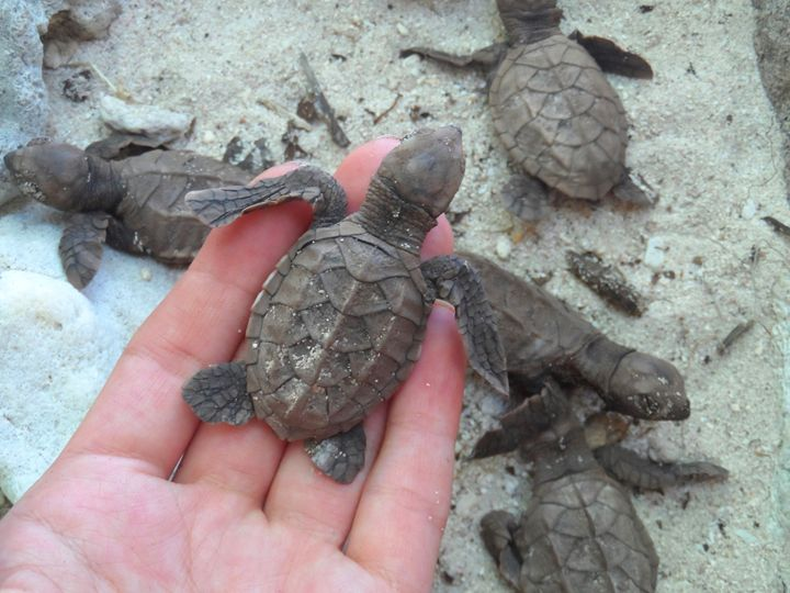 Freeing trapped sea turtles - Kerry Chapman