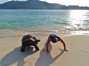 Working out with a tortoise