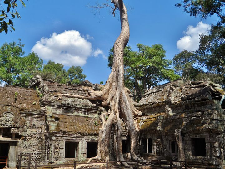 Ta Prohm Temple - Kerry Chapman