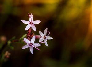 Simplistic Beauty