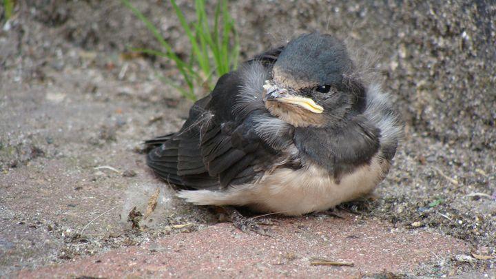 Grounded Baby Bird - Lori Webb