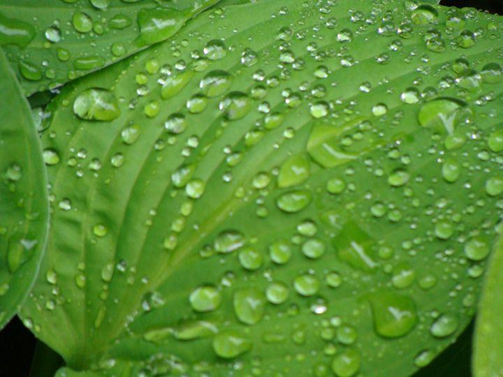 Green Leaf After the Rain - Lori Webb