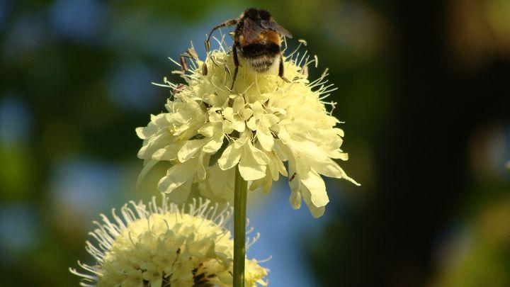 Bumble Bee on Flower IV - Lori Webb