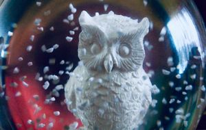 White Owl In Snow Globe