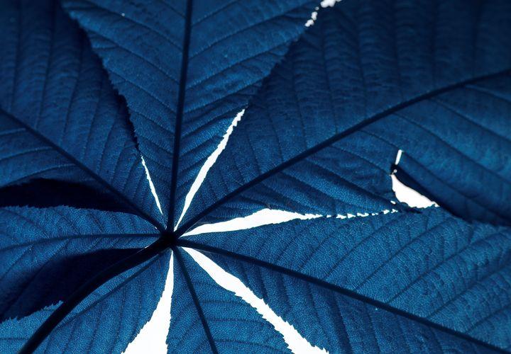 blue leaf - photoel