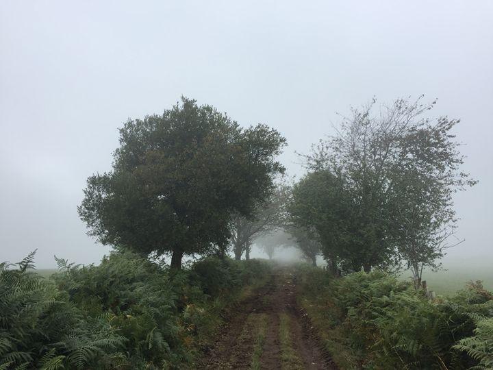 camino - 011 - MICHAELEM