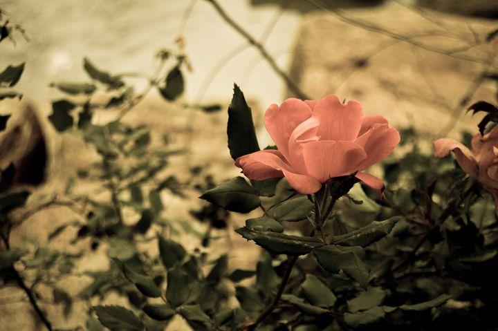 fleur - Lota