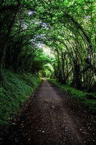 arbre tunnel - Joseph
