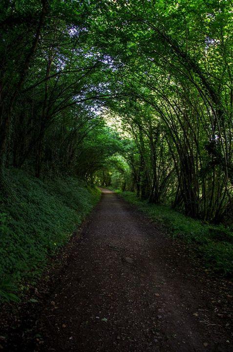 tunnel arbre - Joseph