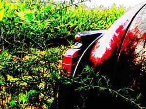 A treasure Hiding in the Weeds - Randy