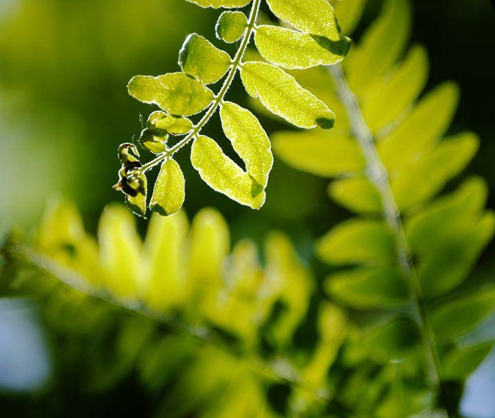 Summer Green - ImagineCalmArtique