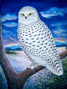 Snowy Owl - Judith Monette