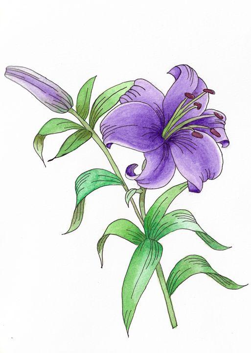 Pen & Watercolour Purple Lily - Natasha's Art