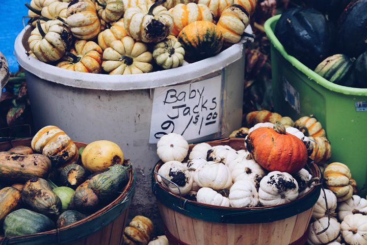 Pumpkin picking - Irina Picknell Photography