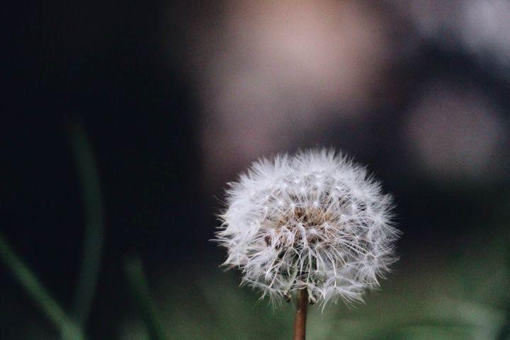 Make a wish - Irina Picknell Photography