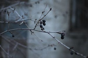 Winter time berries