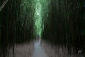 Bamboo Wonderland