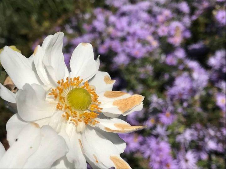 White Sun - Leaigh