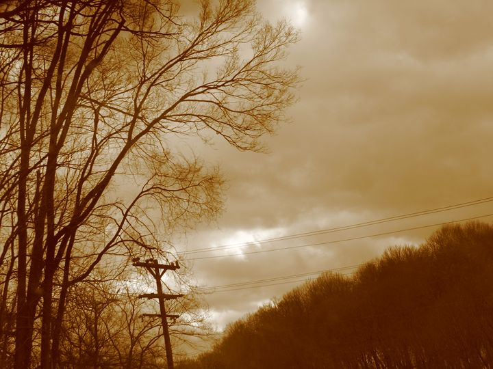 Electric Trees - Shifting Consciousness Photography and Arts