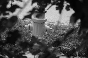 Dog's view - CrystalGigglesPhotography