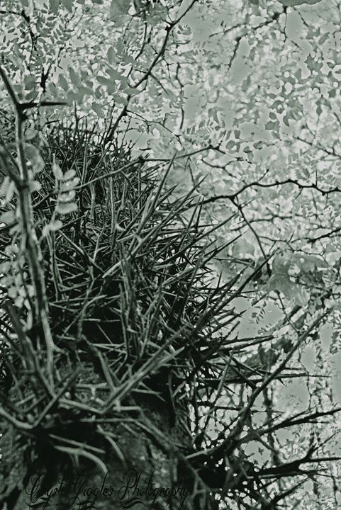 The climbing of tree of thorns - CrystalGigglesPhotography