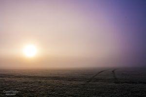 Fog sunrise on the field