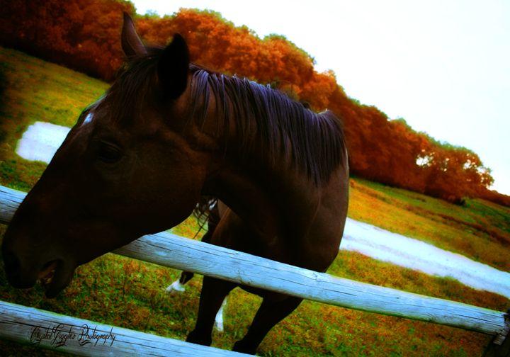 Howdy horse - CrystalGigglesPhotography