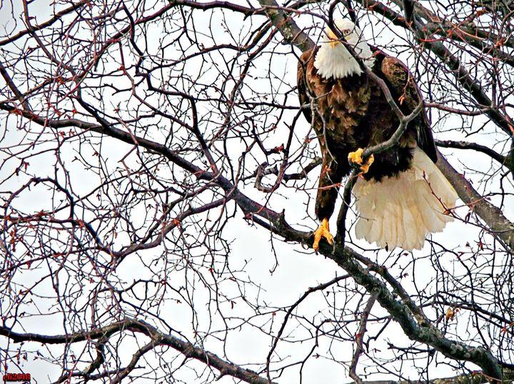 Eagle Eye - aTypical bird!