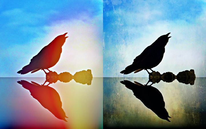 Reflection of Crow - aTypical bird!