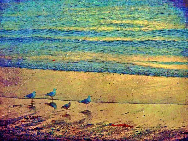gulls facing sunset - aTypical bird!