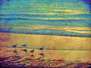 gulls facing sunset