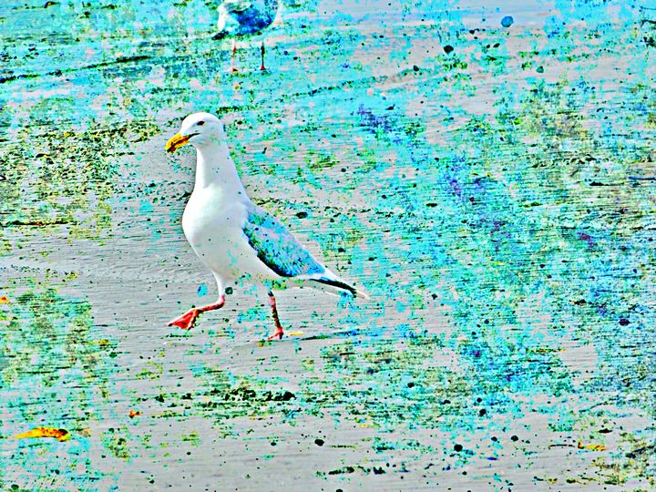 A day at the beach - aTypical bird!