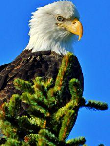 Eagle Eye on the Low Tide