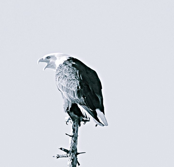 An eagle warning - 151 west