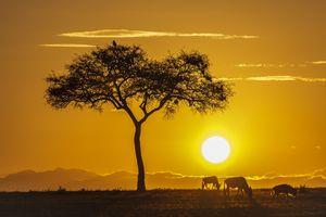 Sunrise on the plains of Masai Mara