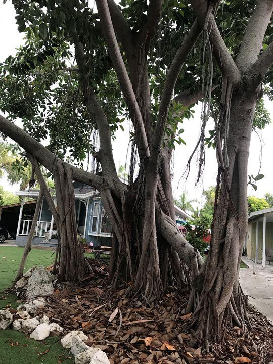 Florida Tree - CAM art