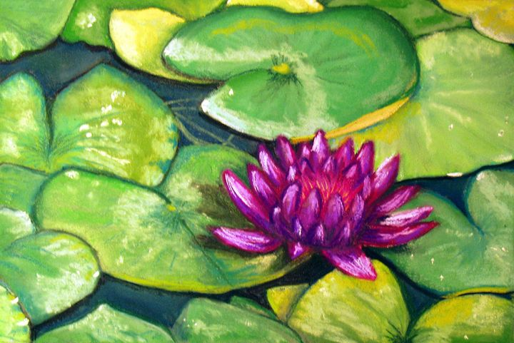 MAGENTA LILY IN POND - D Chambers Art