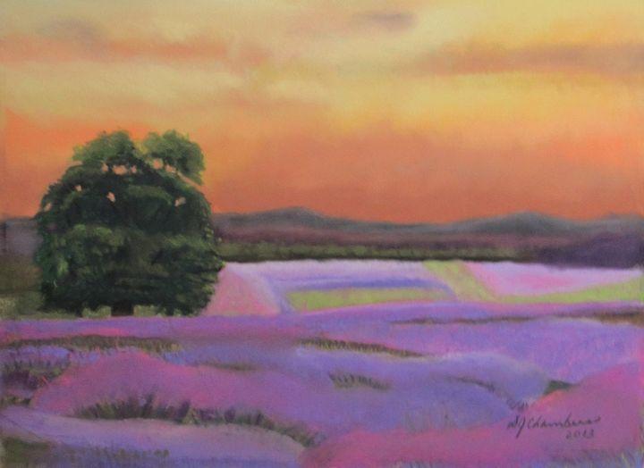Lavender Fields in a Golden Sunset - D Chambers Art