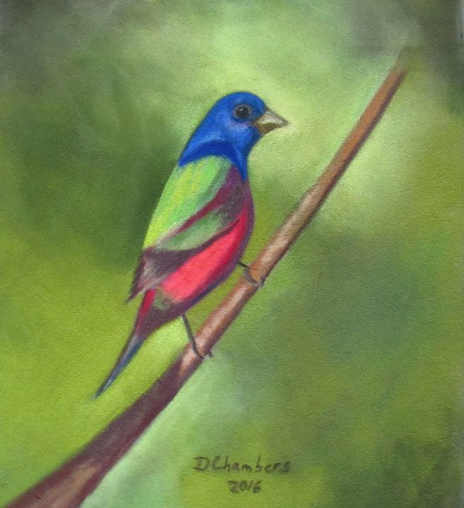 PAINTED BUNTING - D Chambers Art