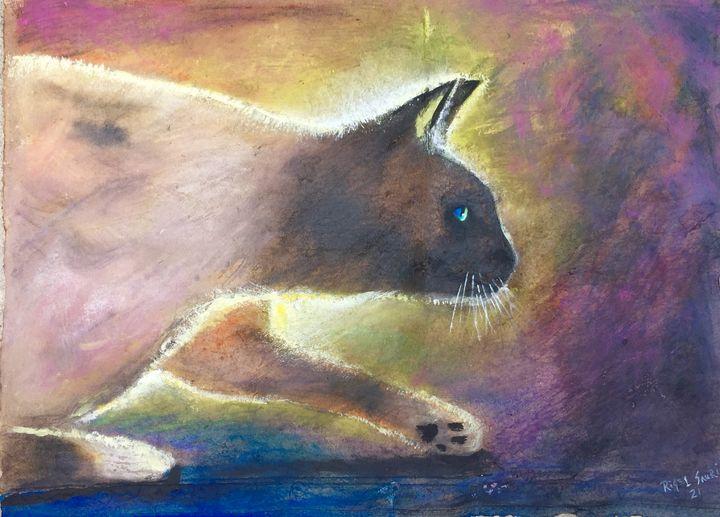 Curious cat - Rigel Sauri