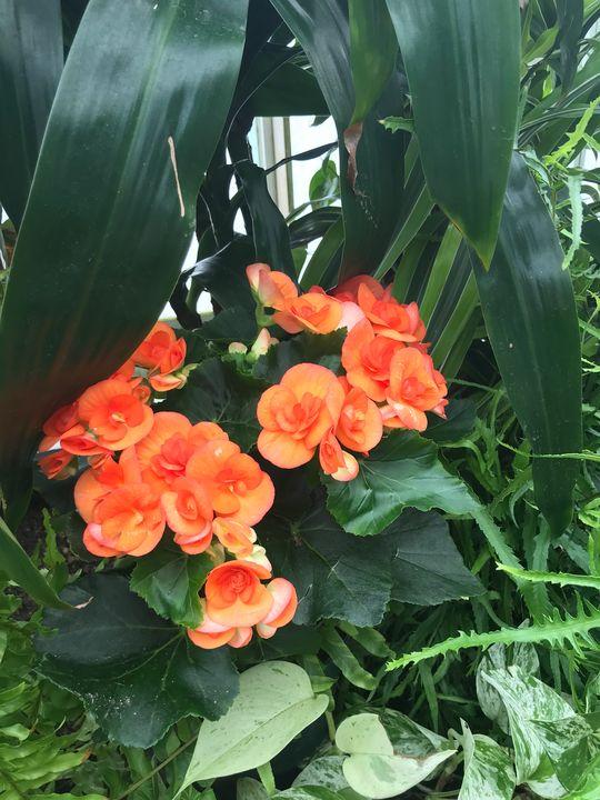 Flowers 3 at Volunteer Park - D. Alan Durham