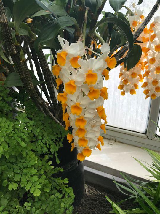 Flowers 2 at Volunteer Park. - D. Alan Durham
