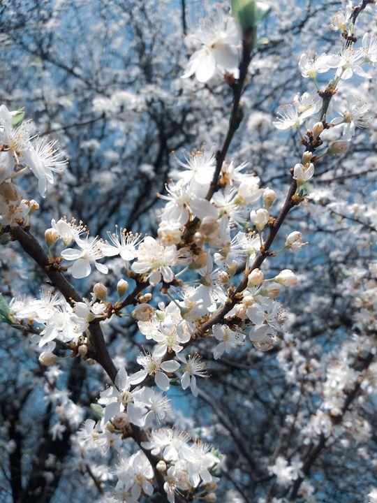 White Flowers - Roxana Oancea